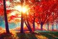 Autumn. Fall Nature Scene. Aut...