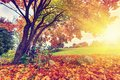 Autumn fall park colorful leaves landscape in sun shining through tree Stock Photos