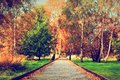 Title: Autumn, fall park. Wooden path, colorful leaves on trees.