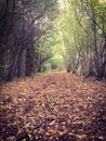 Autumn or fall path through the forest. Royalty Free Stock Photo