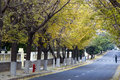 Autumn fall road of the city Stock Photos