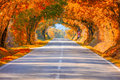 Autumn Fall Road landscape - Real trees tunne Royalty Free Stock Photo
