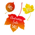 Autumn fall sale, polygonal maple leaves, discount tags,   elements. Seasonal promotion concept. Modern design. Royalty Free Stock Photo