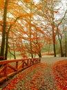 Autumn. Fall scene. Beautiful Autumnal park.