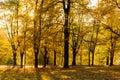 Autumn, Fall scene. Beautiful Autumnal park with pathway. Beauty nature scene. Royalty Free Stock Photo