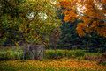 Autumn / Fall scene with trees and rustic fence Royalty Free Stock Photo