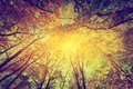 Title: Autumn, fall trees. Sun shining through colorful leaves. Vintage