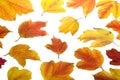 Autumn. Fall viburnum leaves Stock Photo