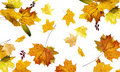 The autumn fallen down leaves Royalty Free Stock Images