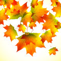 Autumn falling down foliage vector background orange Stock Image