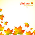 Autumn falling down foliage vector background orange Stock Photos