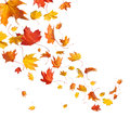 Royalty Free Stock Photography Autumn falling leaves