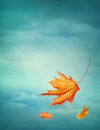 Autumn falling leaves on blue background Royalty Free Stock Photography