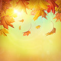 Autumn falling leaves on colorful background Stock Image