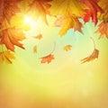 Jeseň padajúce listy