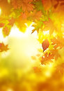 Autumn falling leaves season background design Stock Photography