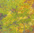 Autumn feeling light and colors Royalty Free Stock Image
