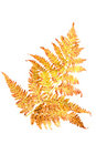 Autumn fern Leaf Royalty Free Stock Photos