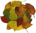 Autumn file leaves xxl Стоковая Фотография