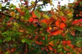 Autumn flora colorful autumnal leafs and berries Stock Photo