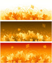Autumn floral banners Stock Photography
