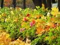 Jeseň kvetina a listy