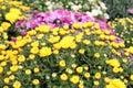 Autumn Flower Nature Background
