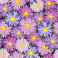 Autumn flower seamless texture with flowers Royalty Free Stock Photos