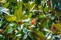 Autumn flower on a tree