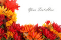 Autumn flowers border Stock Photo
