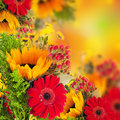 Autumn flowers, bouquet from gerber Royalty Free Stock Photo