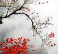 Autumn foggy day in mountains Royalty Free Stock Photo
