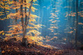 Autumn foggy forest. Mystical autumn forest in blue fog Royalty Free Stock Photo