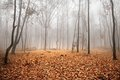 Autumn foggy landscape Stock Photography