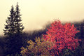 Autumn foggy landscape in Carpathians Mountains Royalty Free Stock Photo