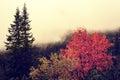 Autumn foggy landscape in Carpathians Mountains Royalty Free Stock Photo