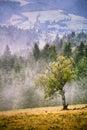 Autumn foggy mountain scene. Fall rain and mist Royalty Free Stock Photo