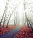 Autumn foggy November landscape. Autumn alley in the foggy city park. Diffusion filter applied Royalty Free Stock Photo