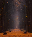 Autumn Foggy Park Avenue With A Pair Of Lovers With Lots Of Orange Fallen Leaves And Leaves,Whirling In The Wind.Two People. Royalty Free Stock Photo