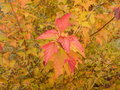 Autumn foliage Stock Images