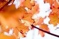 Autumn foliage Royalty Free Stock Images