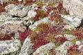 Autumn foliage - Alpine tundra in fall colors, Rocky Mountains, USA Royalty Free Stock Photo