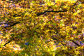 Autumn foliage background soft focus selective focus image cr cross processed for vintage look Stock Photography