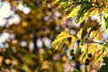 Autumn foliage background soft focus selective focus image cr cross processed for vintage look Stock Photos