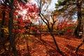 Autumn Foliage In Eikando, Kyoto