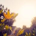 Jeseň listy osvetlené podľa slnečné svetlo