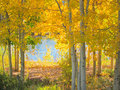 Autumn foliage with a partial view of a lake in colorado Royalty Free Stock Photography