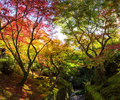 Autumn foliage at Tofukuji Temple, Kyoto Royalty Free Stock Photo