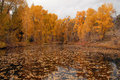 Autumn folliage reflected in lake colorado rockies near buena vista co Stock Photography