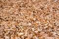 Autumn in Forca D`Acero, Abruzzo National Park, Italy Royalty Free Stock Photo